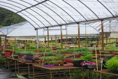 Wholesale Nursery Business for sale NSW Tweed Heads