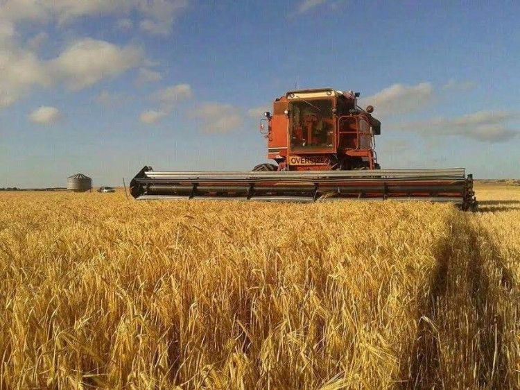 Case IH 1480 Header for sale SA Tumby Bay