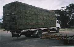 Lucerne Hay Feeds and Grain for sale SA
