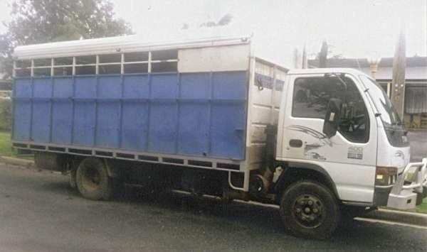 Isuzu 5 Horse Truck Transport for sale Vic